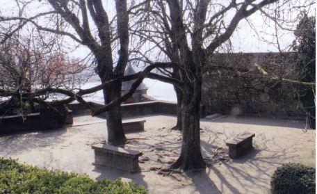 Mont Saint Michel - bomen